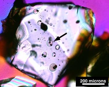Vários melt inclusions em um cristal. A seta aponta um exemplo mas existem vários outros nessa figura (Foto de A. Kent, de Oregon State University)